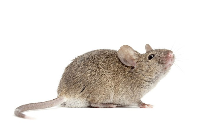 PETA sticks it to RONA over glue traps